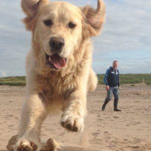 dog-friendly-holidays-beach-walks
