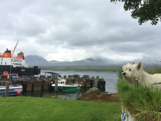Dog friendly holidays in Scotland