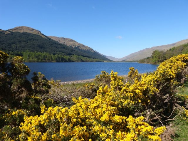 Explore the hidden glens of the Loch Lomond and Trossachs National Park on a guided ranger tour image