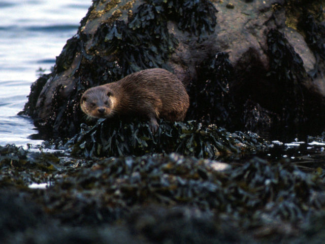Explore the beautiful Isle of Mull off the west coast of Scotland keeping an eye out for local otters, seals and birdlife image