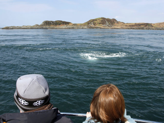 Take a whale-watching trip out into the Atlantic Ocean and explore the Inner Hebrides image