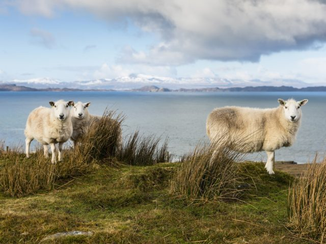 Keep an eye out for wildlife as you explore the beautiful North West coast of Scotland image